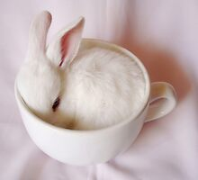 Bunny in a Cup by SandraWidner