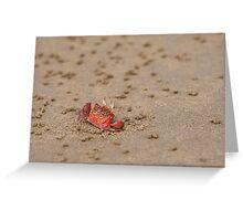 Ghost Crab (Ocypode guadichaudii) 1 Greeting Card
