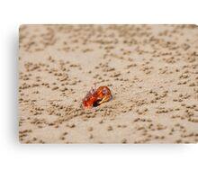Ghost Crab (Ocypode guadichaudii) 2 Canvas Print