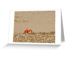 Ghost Crab (Ocypode guadichaudii) 4 Greeting Card