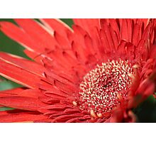 Red Burst Photographic Print