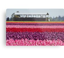 A Rainbow of Tulips Metal Print