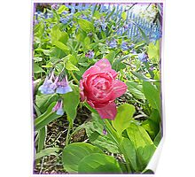 Bluebells and One Pink Tulip Poster