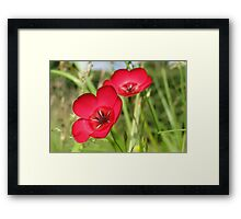 Double Red Flax Framed Print