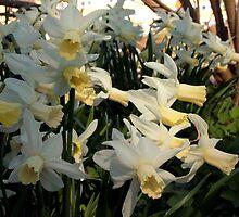 Aggressive Daffodil by AMGunn