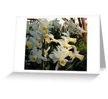 Aggressive Daffodil Greeting Card