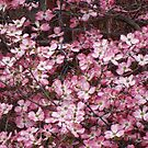 pink dogwood by vigor