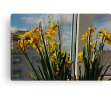 April Daffodils Canvas Print