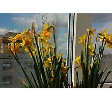 April Daffodils Photographic Print