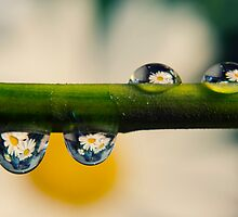 Refraction by Laura Williams