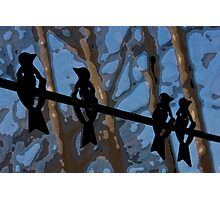 Blackbirds on a Wire Photographic Print