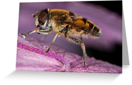 Hoverfly by DesDaly
