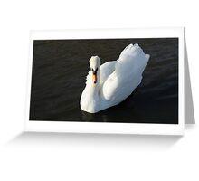 Swanning around Greeting Card
