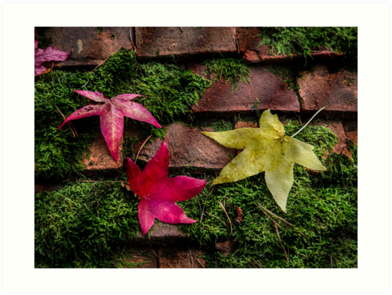 Autumn Leaves by Patricia Jacobs CPAGB LRPS BPE4