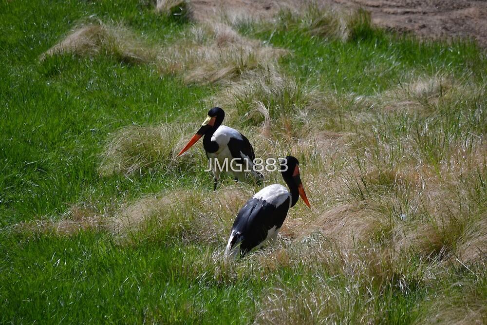 Two Saddle-billed Storks by JMG1883