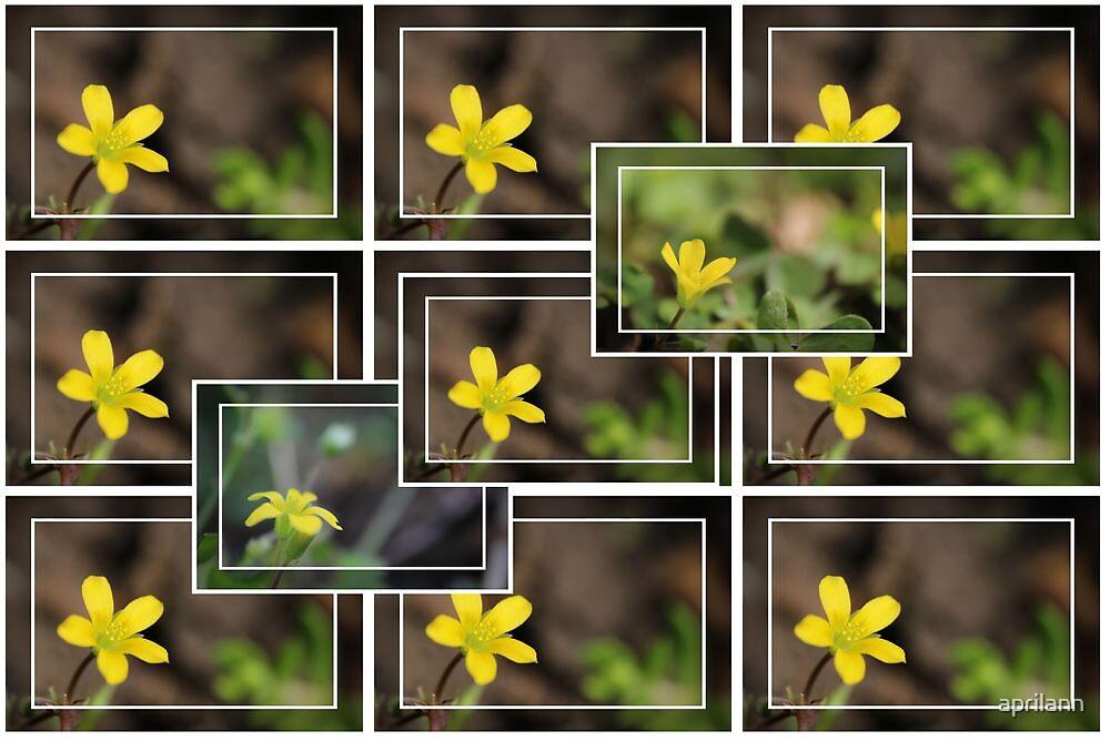 Yellow Beauty in the Garden by aprilann