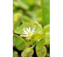 Wonderful White in the Garden Photographic Print