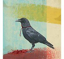 freedom raven Photographic Print