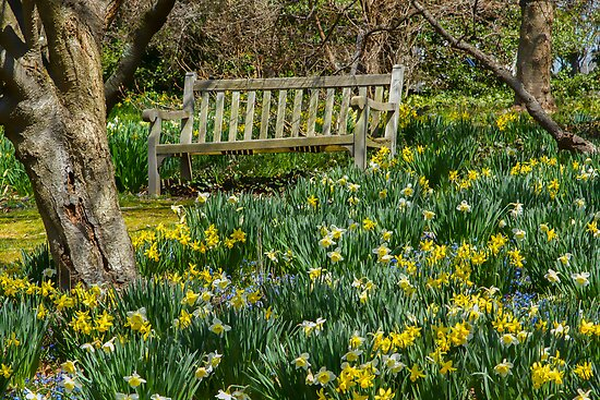 Graced by Daffodils by Marilyn Cornwell