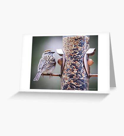 Sparrow Coloured Greeting Card