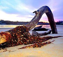 Driftwood on Scamander Beach  Tasmania by MisticEye