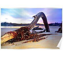Driftwood on Scamander Beach  Tasmania Poster