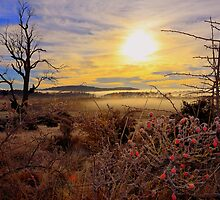 Frosty Morning near Hadpen Tasmania by MisticEye