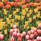 Tulip Garden by Gene Praag