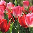 Pink And Red Tulips by Gene Praag