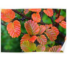 Cradle Fagus Poster