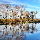 Morning on the South Esk River  Tasmania by MisticEye