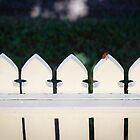 Fence is No Boundary to a Little Visitor by Silken Photography