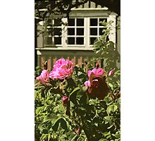 Pink Roses, Green House Photographic Print
