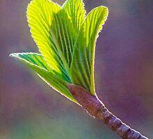 Spring at Last - Baby Siebold Viburnum Leaves by Anita Pollak