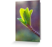 Spring at Last - Baby Siebold Viburnum Leaves Greeting Card