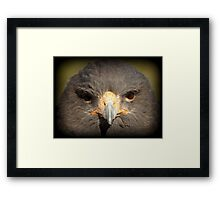 Harris's Hawk~ In Your Face Framed Print