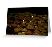 landscapes #235, lily by night Greeting Card