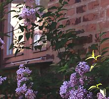 Brick and Lilacs by AMGunn