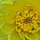 Mellow Yellow by Ray Clarke