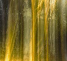 dream forest by ketut suwitra