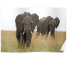 Elephant On the Masai Mara National Park Africa Poster