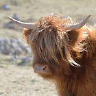 Highland Cattle by Richard Greenwood