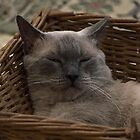 Love in a Basket by TaniahMaree