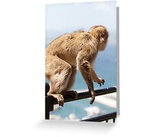 On the move, a Barbary Macaque In Gibraltar Greeting Card