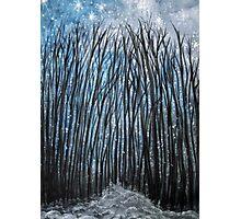 Winter woodland Photographic Print