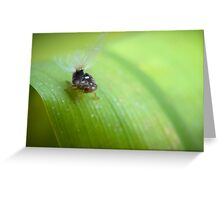 Fluffy Bum (passionvine hopper) Greeting Card