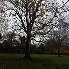 St Stephen's Green Trees by Coexistism