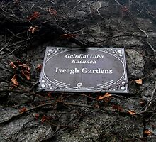 Iveagh Gardens by Coexistism