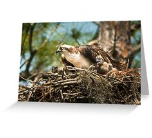 Hungry Osprey Chicks Meal Interrupted Greeting Card