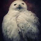 Snowy Owl by AD-DESIGN